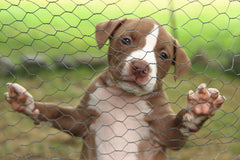Prevention of Cruelty to Animals Month: Ways You Can Help