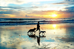 3 Dog-Friendly Places to Visit in the U.S.
