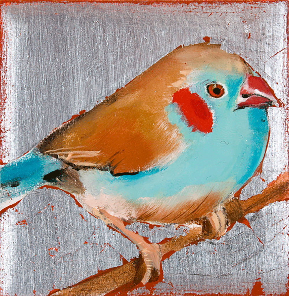 Cordon-Bleu Finch