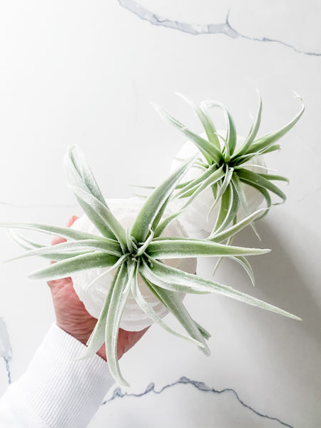 Selenite Air Plant or Tea Candle Holder | ONLY 2
