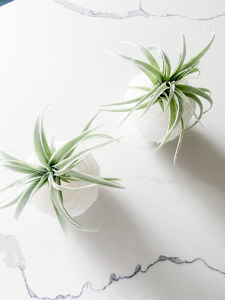 Selenite Air Plant or Tea Candle Holder | Limited Edition
