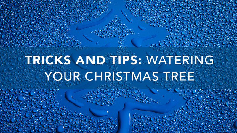 Tricks and Tips: Watering Your Christmas Tree