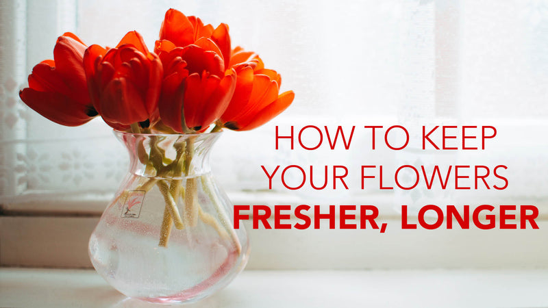 Tips for Keeping Your Cut Flowers Fresh