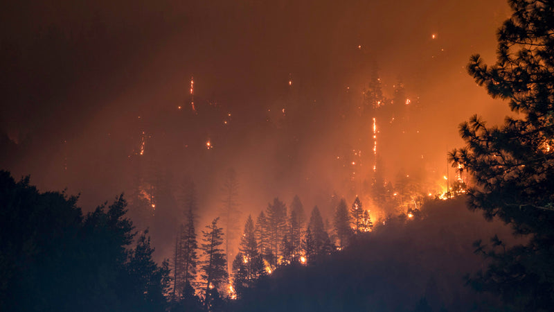 Do Wildfires Affect Drinking Water? image