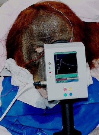 Handheld Multi-species Electroretinography (HMsERG) Model 2000