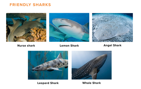 Swimming with Sharks | The Ultimate Guide – Groove Life