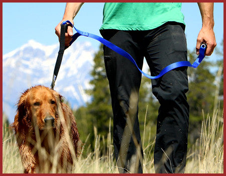 Two-Handle Dog Leashes