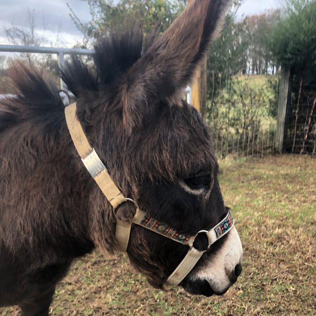 donkey with ID tag