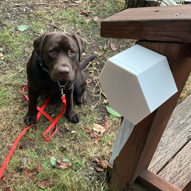 large dog with wall mounted poop bag dispenser