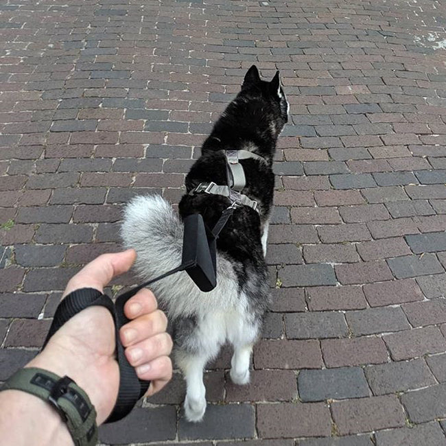 dog with leashboss lite leash