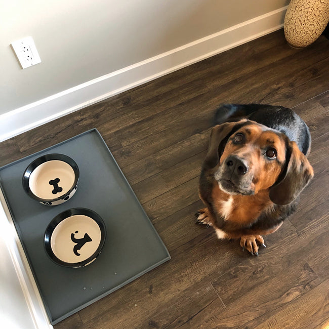 dog with pet food mat and bowls