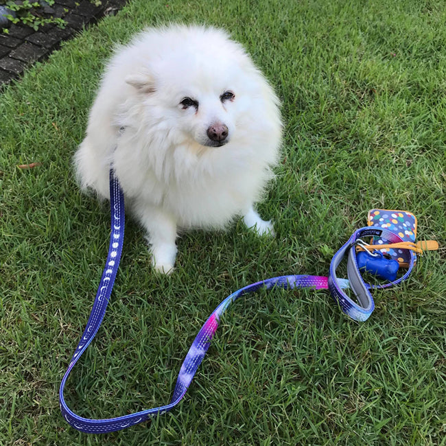 small dog with reflective double thick leash