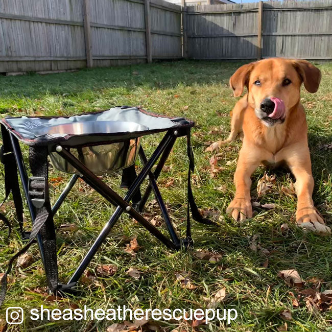 dog with collapsible elevated diner