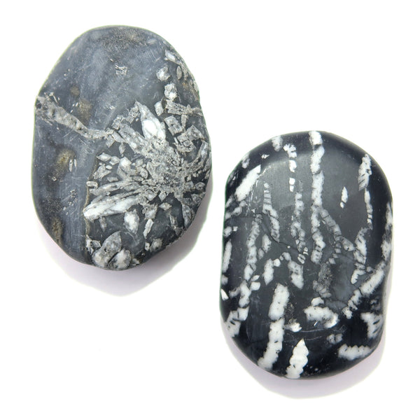 Chrysanthemum Stone Slab 14 Pair White Flower Black