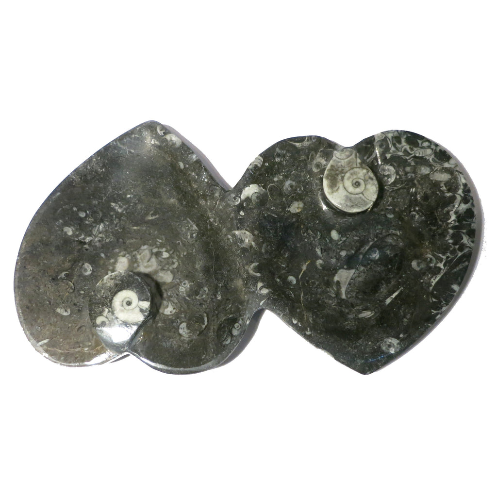 Fossil Dish 07 Double Heart Goniate Black Trinket Plate (1 Pound, 8 Inches)