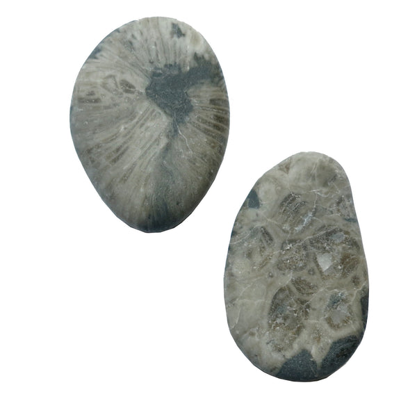 Fossil Magnet 05 Gray Coral Stone Set - I Dig Crystals