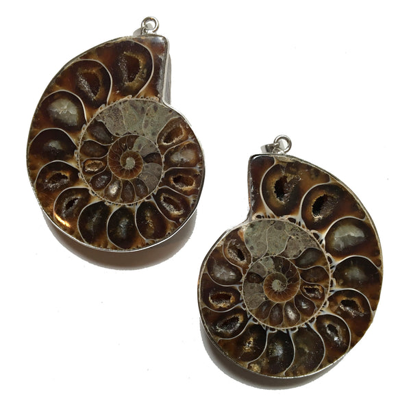Fossil Pendant 13 Matching Set Brown Ammonite Stone - I Dig Crystals