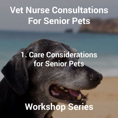 1. Care Considerations for Senior Pets