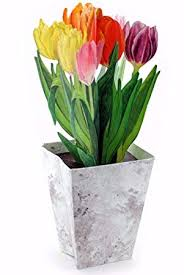 3D Card with Tulips