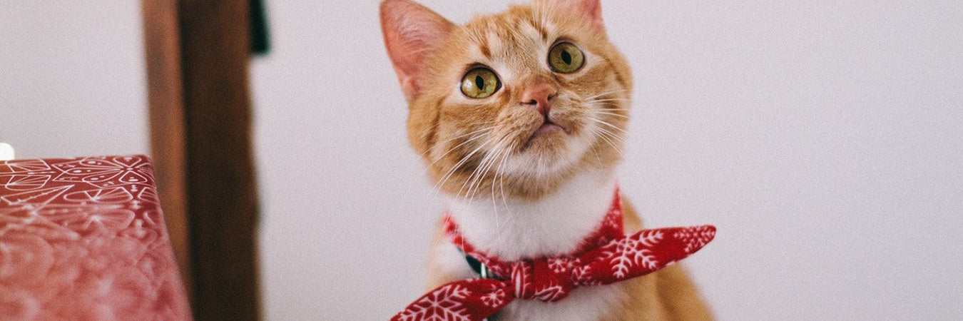 Pet Accessories-Eshopping Philippines