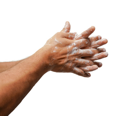 Soapy lathered hands to forearms on white background