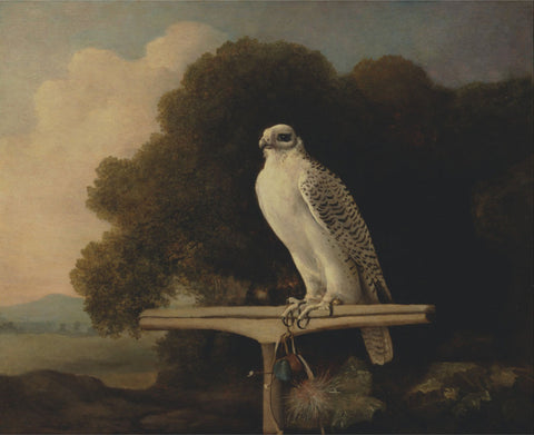 George Stubbs - Greenland Falcon