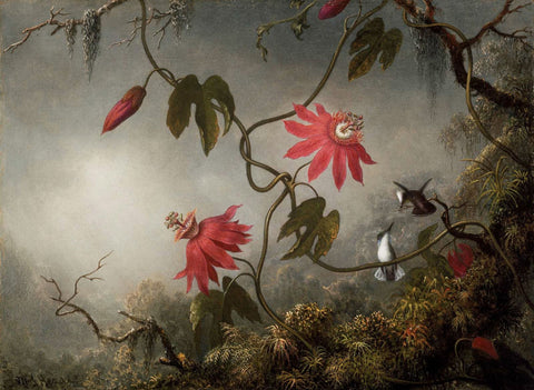 Martin Johnson Heade - Passion Flowers and Hummingbirds