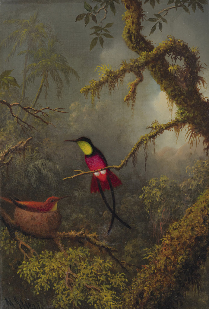 Martin Johnson Heade - A Pair of Nesting Crimson Topaz Hummingbirds