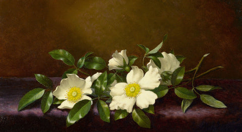 Martin Johnson Heade - Cherokee Roses on a Purple Cloth