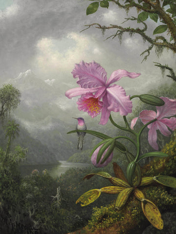 Martin Johnson Heade - Hummingbird Perched on the Orchid Plant