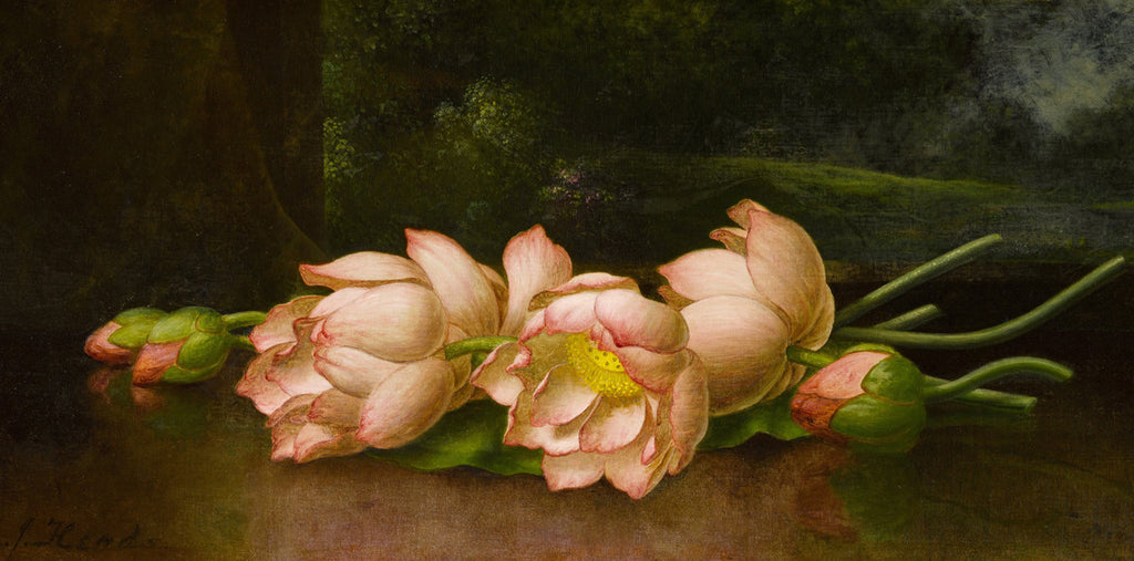 Martin Johnson Heade - Lotus Flowers
