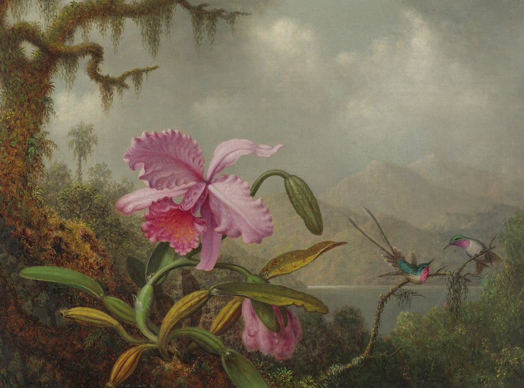 Martin Johnson Heade - Orchids and Hummingbirds