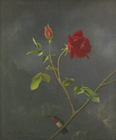 Martin Johnson Heade - Red Rose with Ruby Throat