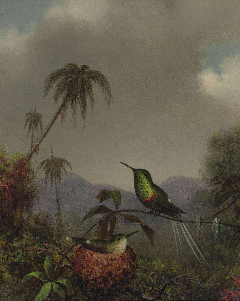 Martin Johnson Heade - Two Thorn Tails (Langsdorffs Thorn Tail Brazil)