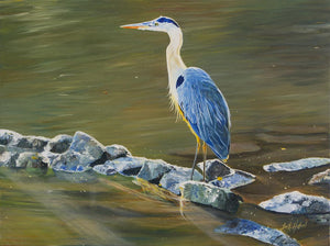Leah Holland: Bue Heron