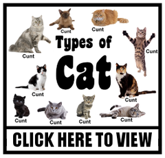 Types of Cat