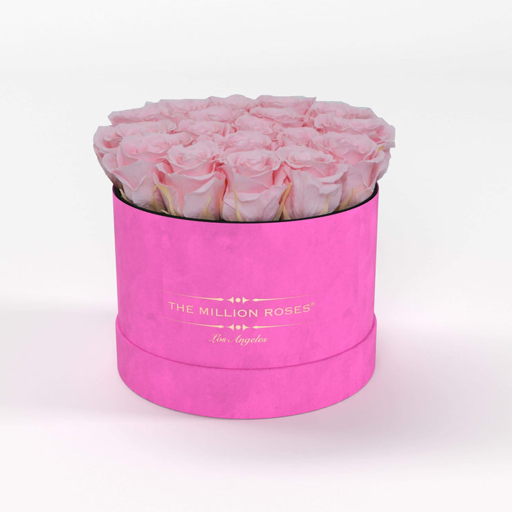 classic round box - hot-pink suede (LA) classic round - the million roses