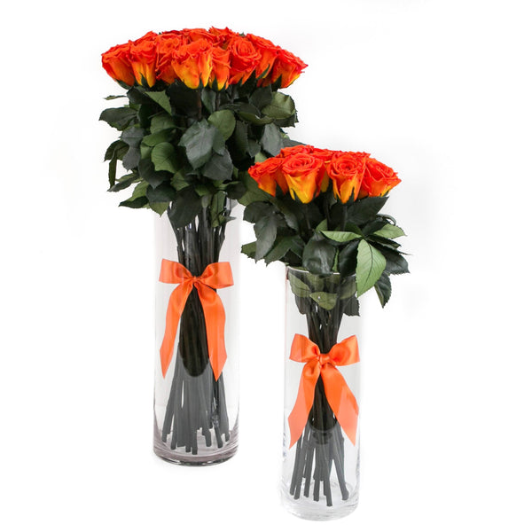 LONG STEM collection - orange roses orange eternity roses - the million roses