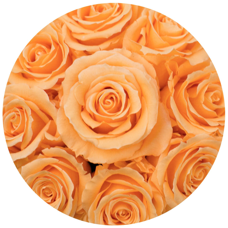 basic round box+ box - white - apricot + roses apricot eternity roses - the million roses