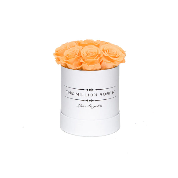 the million Basic+ box - white - apricot ETERNITY+ roses apricot eternity roses - the million roses