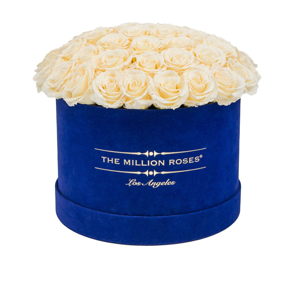 the million medium+ - glamour royal-blue suede box - ivory (dome) eternity roses ivory eternity roses - the million roses