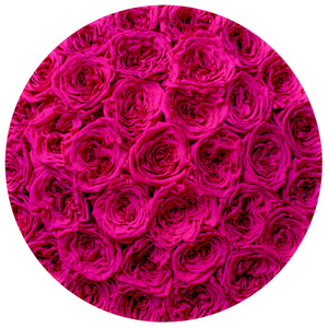 medium round box - black - hot-pink GARDEN roses eternity garden roses - the million roses
