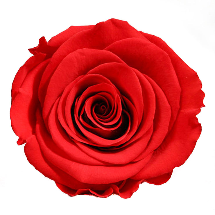 LONG STEM collection - red roses red eternity roses - the million roses