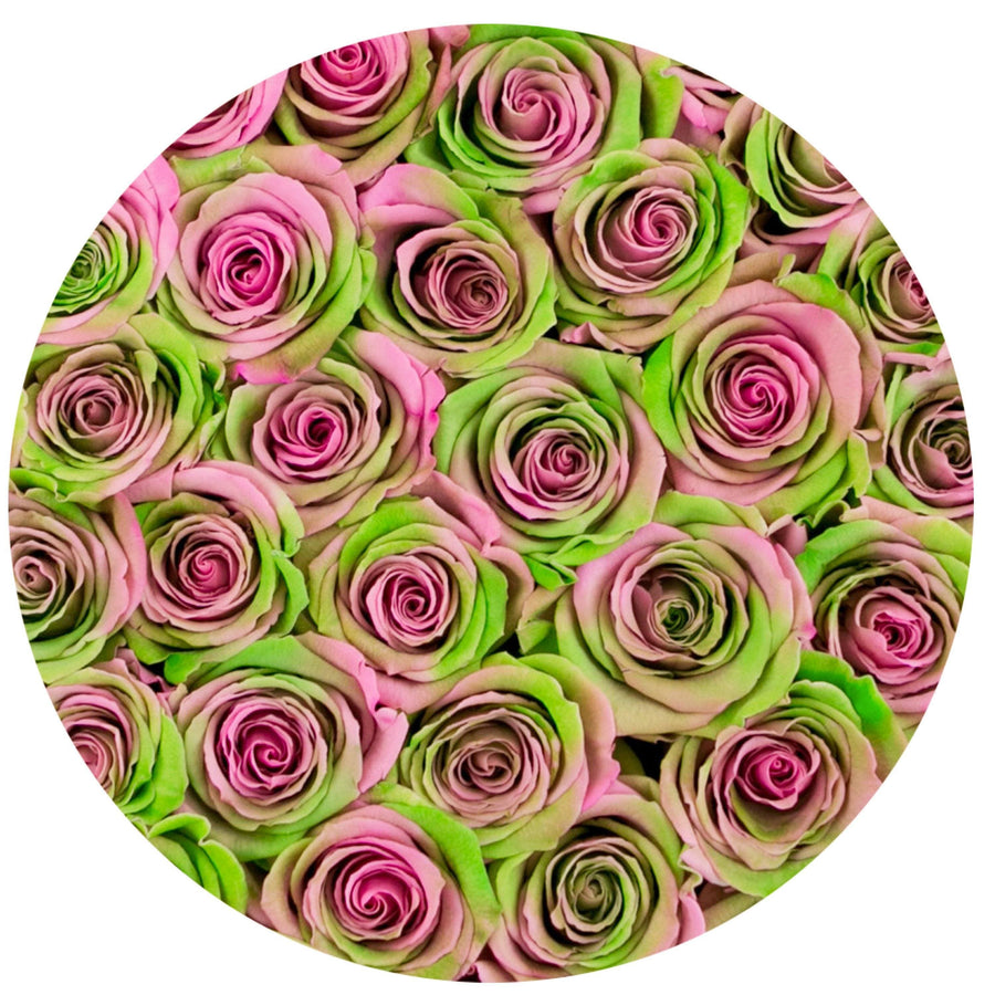 small round box - pink - tropical-rainbow ETERNITY roses tropical-rainbow eternity roses - the million roses
