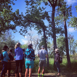 Creek Trail Edible & Medicinal Plant Walk / July 22nd