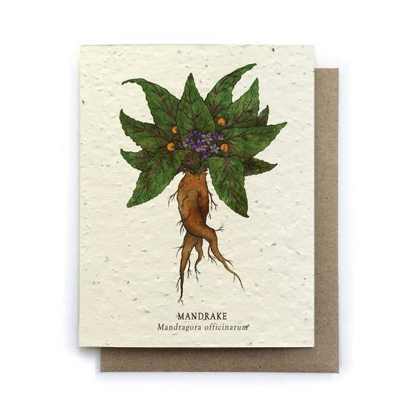 Plantable Greeting Card {The Bower Studio}
