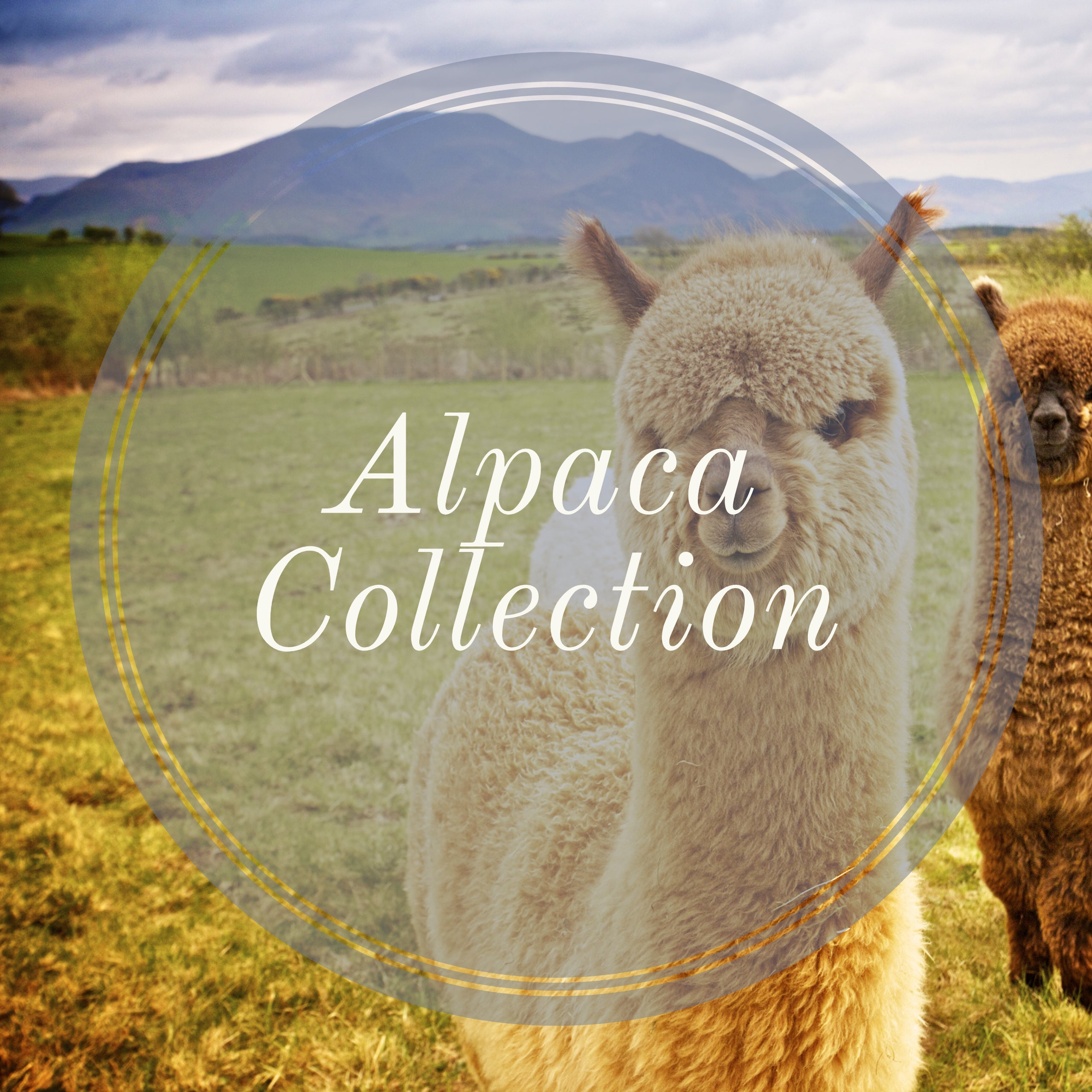 Alpaca Collection
