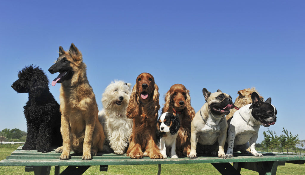 Various Dog Training Methods and Their Importance