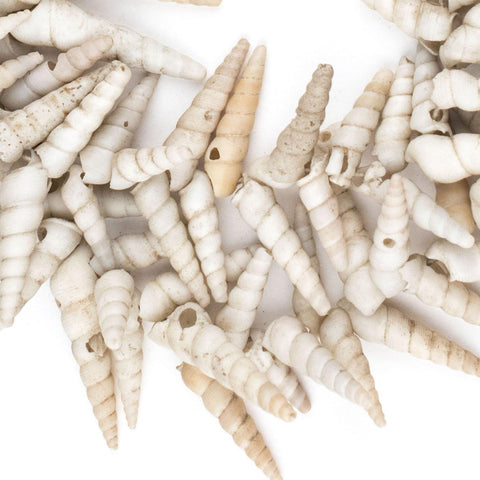 West African Porcupine Shell Beads (White) - The Bead Chest