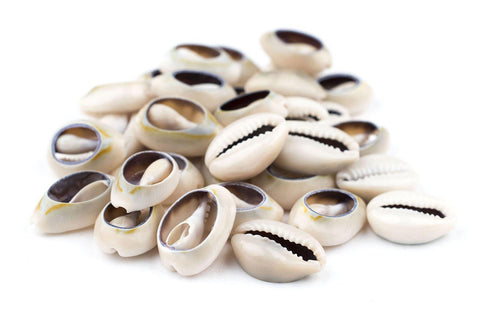 Cowrie Shells (Large) - The Bead Chest